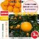 【早期予約受付中】和歌山県由良町産 柑橘 清美オレンジ【ご家庭用】サイズ混合 3kg /箱【送料無料】