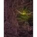 神秘の森・29(静寂02)