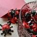 Swiss マエストラーニ社 てんとう虫 organicchocolate 10個