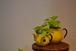 丸いフォルムがかわいい黄色のポッド(大)