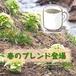 春ブレンド 100g