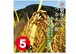 環境保全米コシヒカリ玄米5㎏