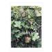 ポストカード:秋日 (EH-013)