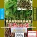 【天然山菜】【天然みずの実/300g】自然の恵み 限定予約販売 青森県白神山麓便