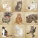 猫の手描きイラスト・似顔絵の着色オプション