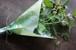 菜の花の包装紙