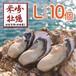 【米崎牡蠣】生食用殻付き牡蠣  Lサイズ(10個)
