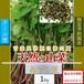 【天然山菜】【天然みずの実/1Kg】自然の恵み 限定予約販売 青森県白神山麓便