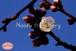 青葉の梅林2~Plum grove~⑥