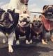 BULLBOO オリジナルロンT French Bulldog
