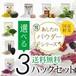 【メール便送料無料】選べる国産野菜パウダー3パックセット!