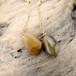 Peas 自然石のチェーンピアス