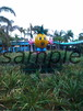 パイナップルパーク写真