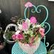 コベントガーデン陶器鉢のギャザリング寄せ植え