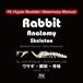 YILハイパーブックレット ヴェテリナリマニュアル「ウサギ-解剖-骨格」
