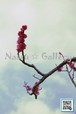 青葉の梅林~Plum grove~⑧