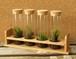 【苔テラリウム】小さなコケの森 試験管4本セット 試験管立付き