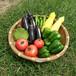 夏の有機野菜セット