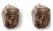 イベリコ豚 ローストポーク 2個セット ~ イベリコ豚肩ロースと塩コショウだけで焼き上げた無添加ローストポーク ~