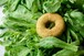 【期間限定!】冬に美味しい菜っ葉満喫!ドーナツ12個ギフトセット