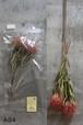 PLANTAHOLIC DIFFUSER 『Type A』-Rita Rose-
