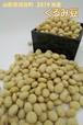 くるみ豆(山形県河北町産)300g×2袋