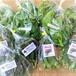 ネバネバ野菜セット 送料込み(80サイズ)