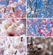 梅と桜のポストカード2017(6枚セット)