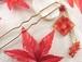 秋の夕日に照らされる秋の山の紅葉のかんざし