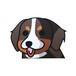 バーニーズマウンテンドッグ(小)     犬ステッカー