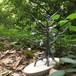 【生命の樹‐standard‐】