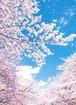 季節・お気に入り・こだわり などから絵はがきを選んで下さい