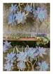 柳川たみ『白牡丹』2