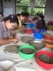 ダイレクトトレード ミャンマー2019年度手詰み完熟豆200g