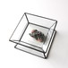 Specimen Case / 白鉛鉱+重晶石+方鉛鉱
