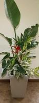 観葉寄せ植(2)