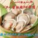 冷凍殻付きホタテ(8~10枚)