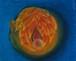 第2チャクラ オレンジ-Second chakra -Svadhisthana-Orange