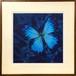 ※販売終了 水口 かよこ「青い翅のための装画」