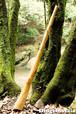 No.053 ディジュリドゥ(木の種類:樺(カバの木) / キー: E )