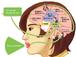 「音読の大切さに気付かせるための脳内メカニズムスライド」