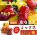 新鮮野菜 【箱売り】 カラーピーマン  混合サイズ 2.5kg/箱  鹿児島県産 【送料無料】 【大量販売】