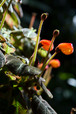 plants_IMG_6024.dng
