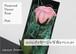花びらにメッセージと写真をプリント〜バラのギフト