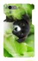 スマホケースiPhone7「子犬」(送料無料)