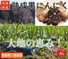 【ご家庭用】青森県産 熟成黒にんにく バラ80g【無選別】福地ホワイト六片種【産地直送】