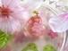 桜のWハートペンダント