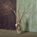 流木の小枝と漂着ビンのオーナメント-1