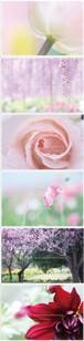 ポストカード集*横写真(ピンクパープル)