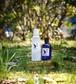 白樺化粧水